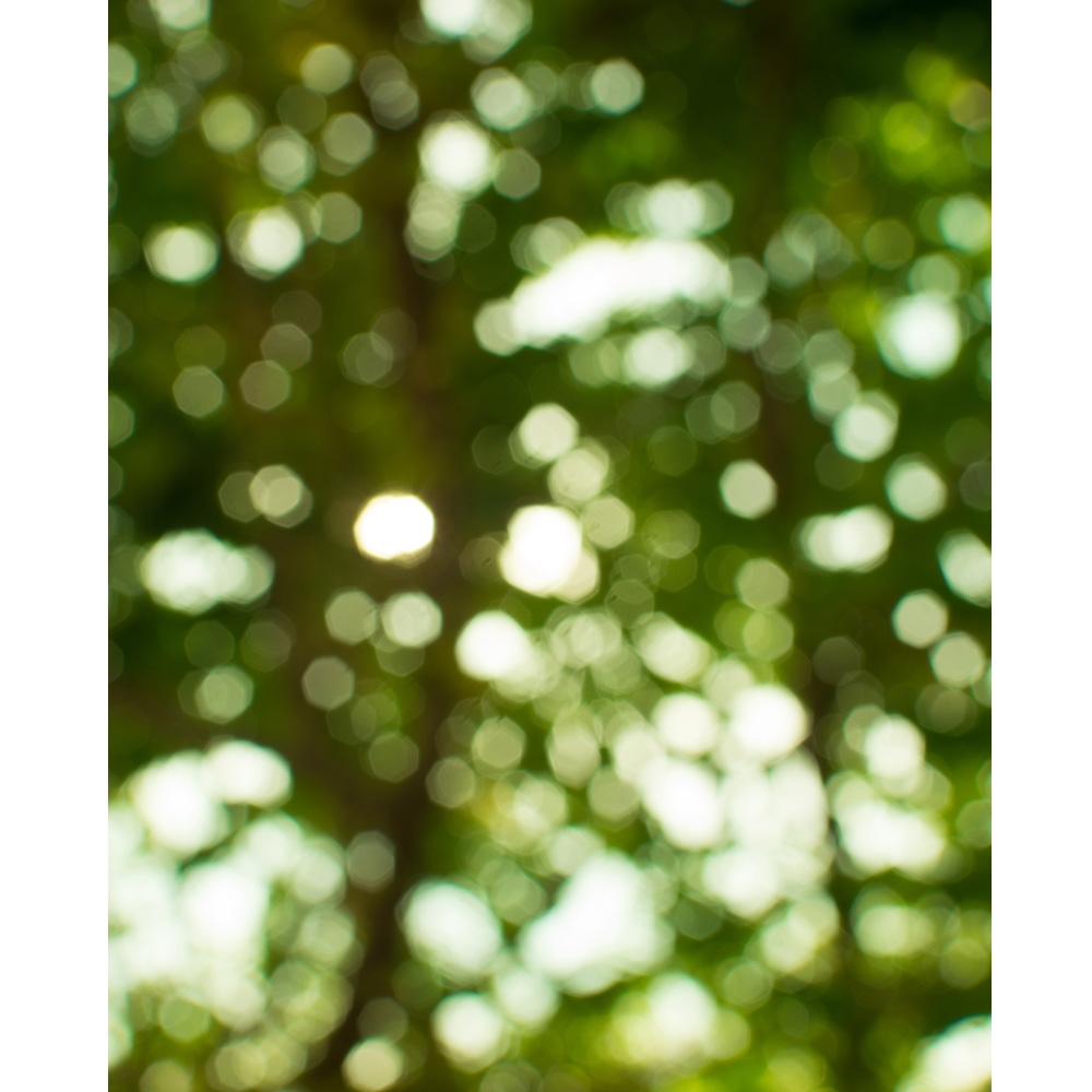 Forest Trees Bokeh Printed Backdrop Backdrop Express