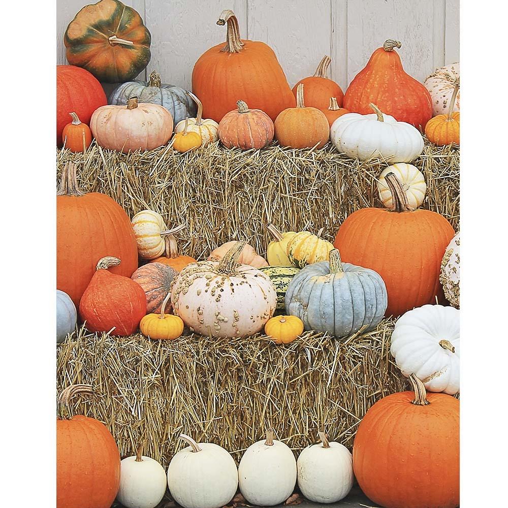 Pumpkin Wall Printed Backdrop Backdrop Express