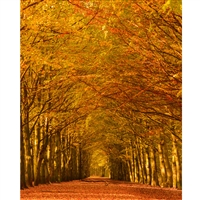 Autumn Lane Printed Backdrop