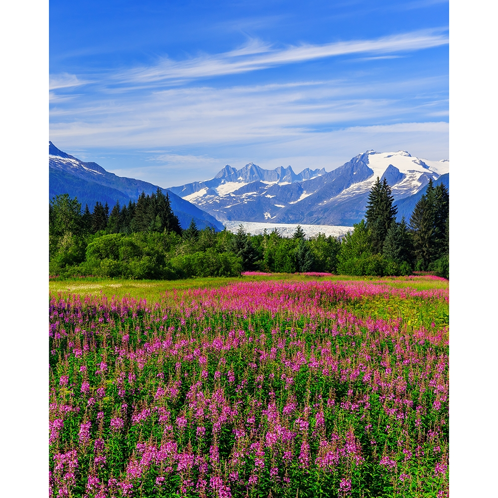 Alaskan Meadow Printed Backdrop Backdrop Express