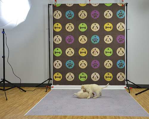 poly paper backdrops Photography backdrops by backdropsource australia photo backdrop for professional shoot photography backgrounds made of 100% cotton yarn ships from brisbane.