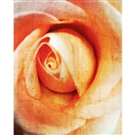 Linen Rose Printed Backdrop