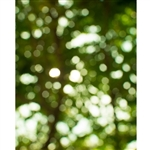 Forest Trees Bokeh Printed Backdrop