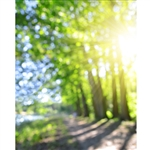 A Stroll in the Park Bokeh Printed Backdrop