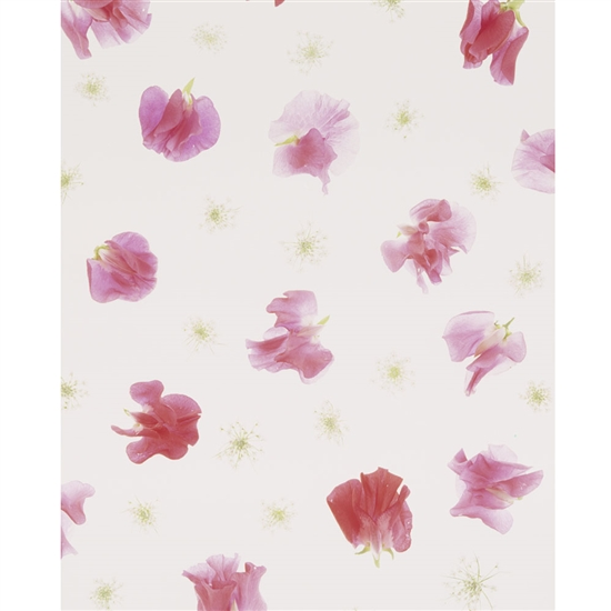 Painted Flower Petals Printed Backdrop
