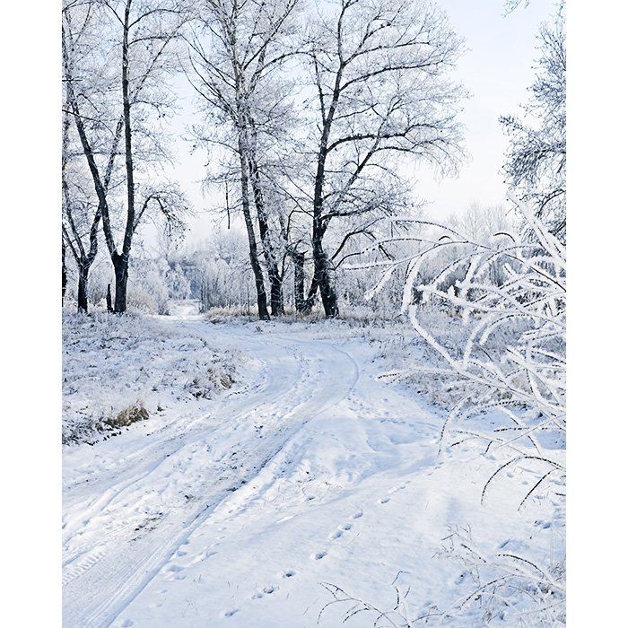 winter scene printed backdrop backdrop express