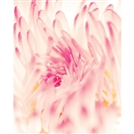 Blurred Floral Printed Backdrop