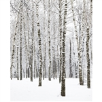 Winter Birchwood Printed Backdrop