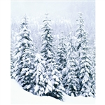 Snow-Covered Trees Printed Backdrop