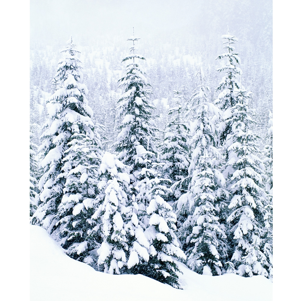 Snow Topped Trees Premium Printed Felt Sheet  Made in USA  Baby Safe