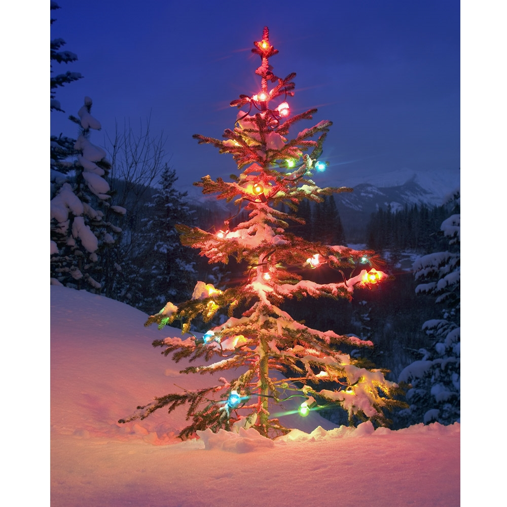 Lonely Christmas.Lonely Christmas Tree Printed Backdrop
