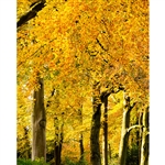 Autumn in the Forest Printed Backdrop