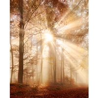 Autumn Daybreak Printed Backdrop