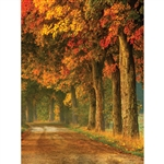 Fall Trail Printed Backdrop