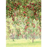 Apple Orchard Printed Backdrop