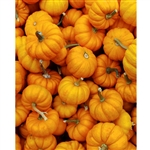 Pile of Pumpkins Printed Backdrop