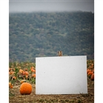 Pumpkin Patch Printed Backdrop
