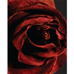 Luscious Rose Printed Backdrop