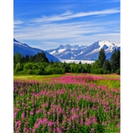 Alaskan Meadow Printed Backdrop