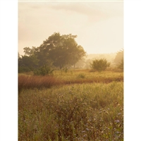 Golden Light Field Printed Backdrop