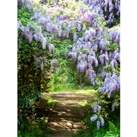 Wisteria Path Printed Backdrop