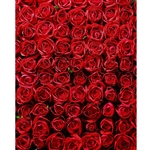 Bed of Roses Printed Backdrop